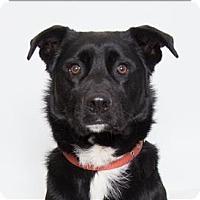 Adopt A Pet :: Jupiter - San Luis Obispo, CA