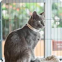 Adopt A Pet :: Tom - New Orleans, LA