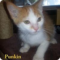 Adopt A Pet :: PUNKIN - Golsboro, NC