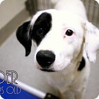 Adopt A Pet :: Raider (Foster Needed URI) - Gulfport, MS