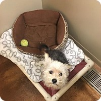 Adopt A Pet :: Lilly - Philadelphia, PA