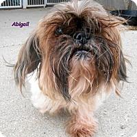 Adopt A Pet :: Abigail - Oskaloosa, IA
