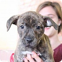 Adopt A Pet :: Orion - Los Banos, CA