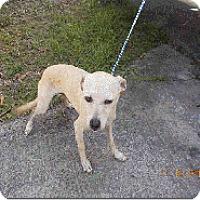 Adopt A Pet :: Ronney - Manhattan, NY