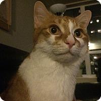Adopt A Pet :: Leo - Toronto, ON