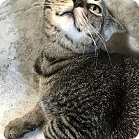 Adopt A Pet :: Aaron - Marco Island, FL