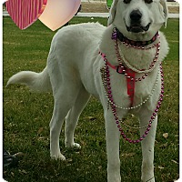 Adopt A Pet :: Pearl - Terrell, TX