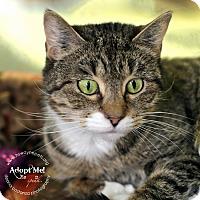 Adopt A Pet :: Tootsie - Lyons, NY
