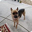 Adopt A Pet :: COURTESY POST - Rosie