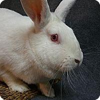 Adopt A Pet :: Lucinda - Newport, DE