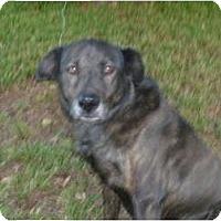 Adopt A Pet :: JODY - Mission Hills, CA