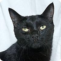 Adopt A Pet :: Samantha L - Sacramento, CA