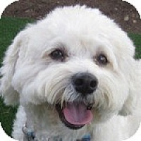 Adopt A Pet :: McDreamy - La Costa, CA