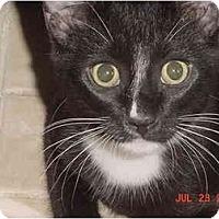 Adopt A Pet :: Digger - Inverness, FL