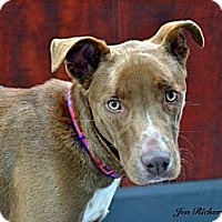 Adopt A Pet :: Chevy - PENDING, in Maine - kennebunkport, ME