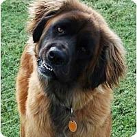Adopt A Pet :: Tyler - Kansas City, MO