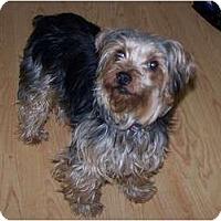 Adopt A Pet :: Allie - Chewelah, WA