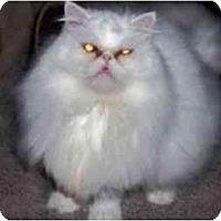 Adopt A Pet :: Milo - Columbus, OH