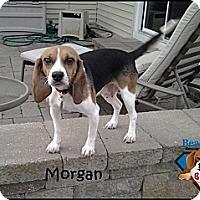 Adopt A Pet :: Morgan - Yardley, PA