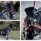 Adopt A Pet :: Ravyn