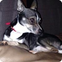 Adopt A Pet :: Bolt - S. Pasedena, FL