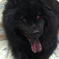 Adopt A Pet :: Rocky - Fennville, MI