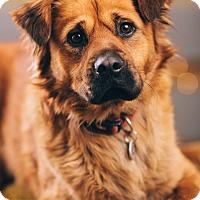 Adopt A Pet :: Jimmy Dean - Portland, OR