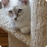 Adopt A Pet :: Baby Skylar - Davis, CA