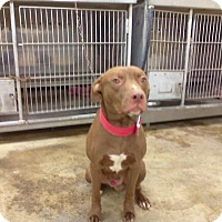 Adopt A Pet :: CHEVY - Upper Sandusky, OH
