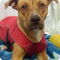 Adopt A Pet :: Wink - Fayetteville, AR