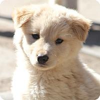 Adopt A Pet :: Appleby - Norwalk, CT