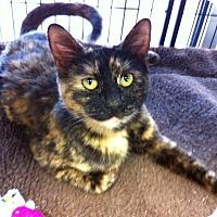 Adopt A Pet :: Gidget - Horsham, PA