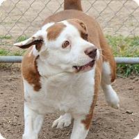 Adopt A Pet :: Harriett - Iola, TX