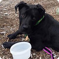 Adopt A Pet :: Slater - San Diego, CA