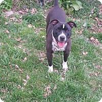Adopt A Pet :: Simran - Freeport, NY