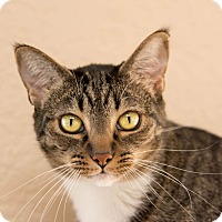 Adopt A Pet :: Hanna - Fountain Hills, AZ