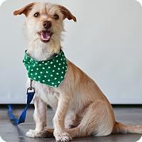 Adopt A Pet :: Milo - Calgary, AB