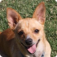 Adopt A Pet :: Sharky - Edmonton, AB
