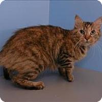 Adopt A Pet :: Gloria - Portland, OR