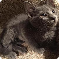 Adopt A Pet :: Mercedes - East Hanover, NJ