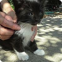 Adopt A Pet :: Kovu - Monrovia, CA