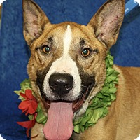 Adopt A Pet :: Roscoe - Jackson, MI
