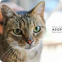 Adopt A Pet :: Rosie - Edwardsville, IL