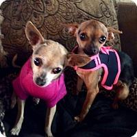 Adopt A Pet :: Jayla & Cayla - Los Angeles, CA