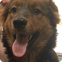 Adopt A Pet :: Jamie - Billerica, MA