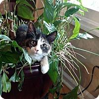 Adopt A Pet :: Moxie - Warner Robins, GA