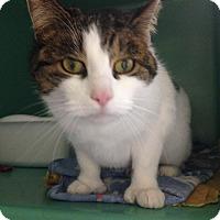 Adopt A Pet :: Emily - Franklin, NH