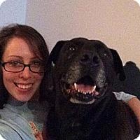 Adopt A Pet :: Bay - Oak Brook, IL