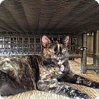 Adopt A Pet :: Esme - Waxhaw, NC