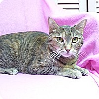Adopt A Pet :: Cecilla - St. Petersburg, FL